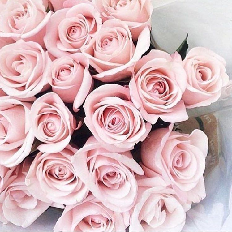 Pink Roses Flowers Pinterest Flowers Pink Roses And Rose