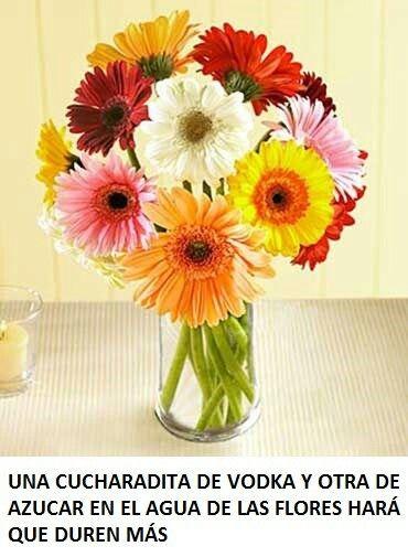 Vodka Y Azúcar Para Las Flores Ramo De Margaritas Entrega De Flores Arreglos Florales De Girasol