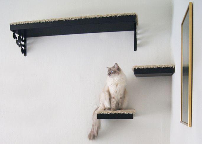 Plankjes Aan De Muur Voor Kat.De Planken Aan De Muur Leuk Oppimpen Voor Je Kat