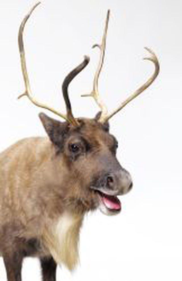 Is Santa's 7th Reindeer Named Donner or Donder?