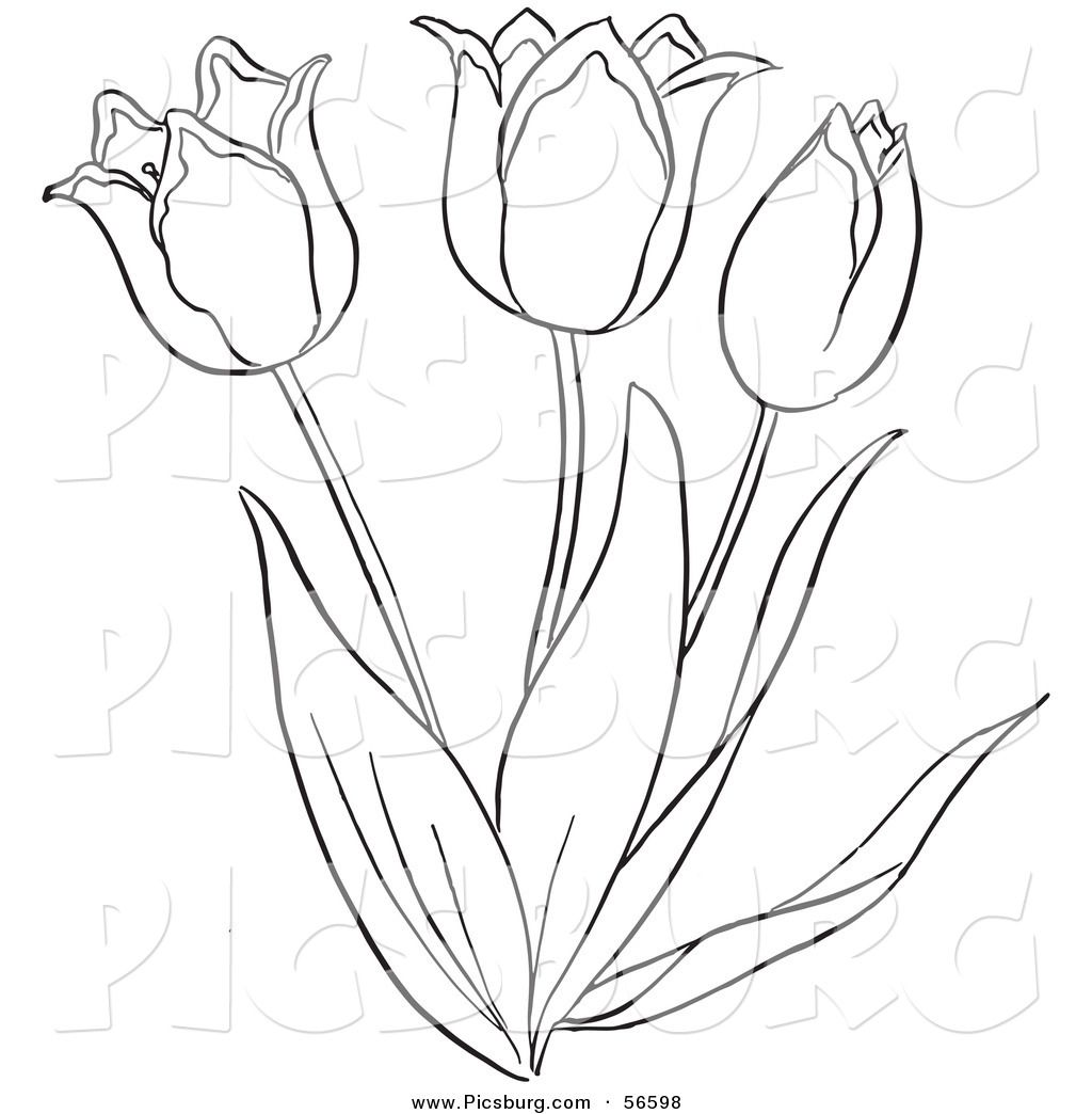 Tulips Drawing Outlines