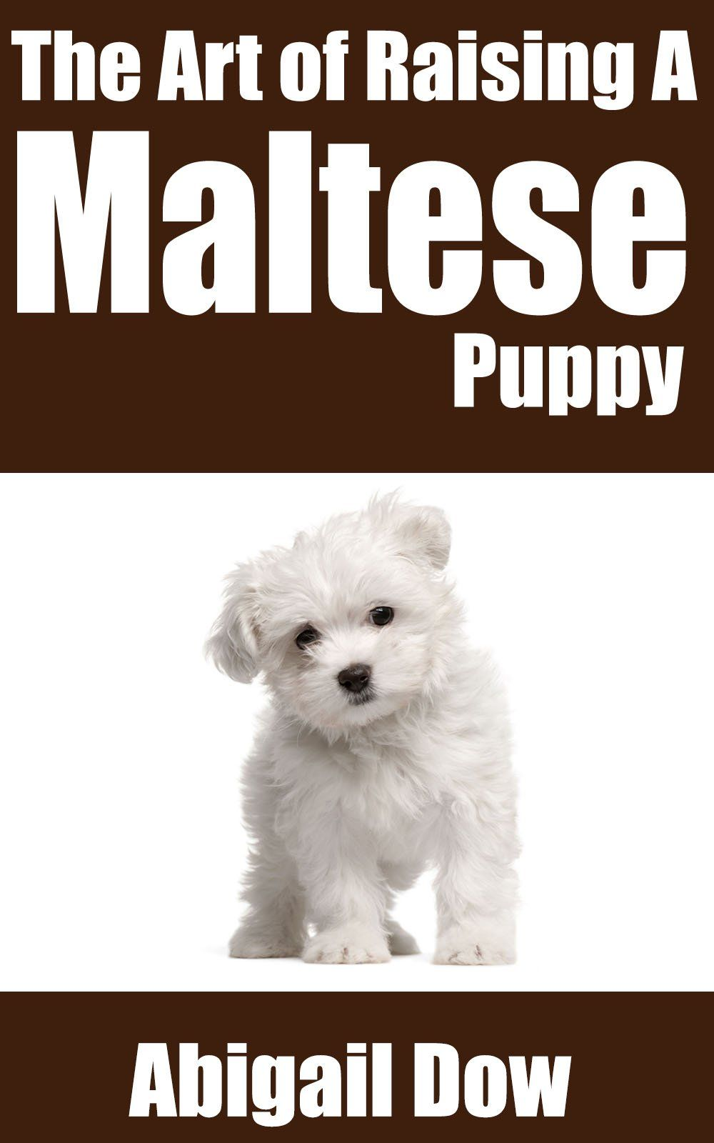 The Art Of Raising A Maltese Puppy From Puppyhood To Adult Dog