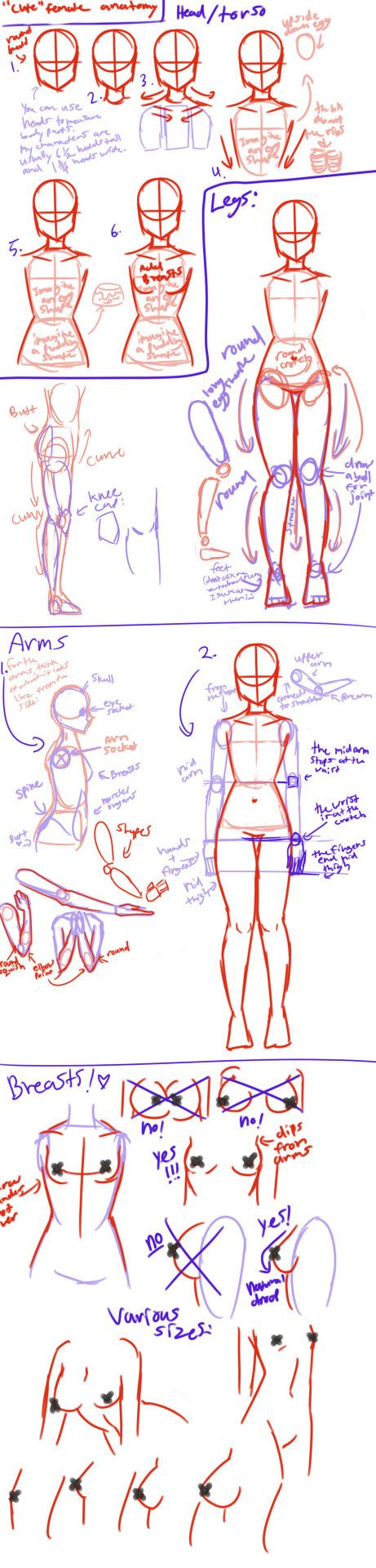 Cute Female Anatomy Tutorial By Angeliccarrot References