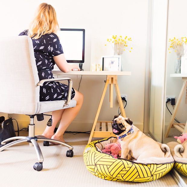 Pet Friendly Home Tour Madeleine Burke Wilma With Images