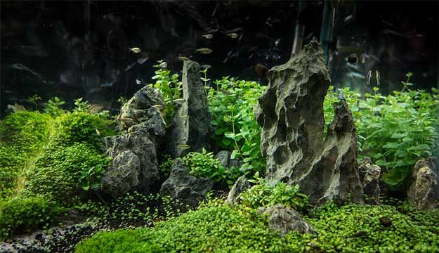 Design Basics Applied To Aquascape (small Aquascape With HC Substrate)