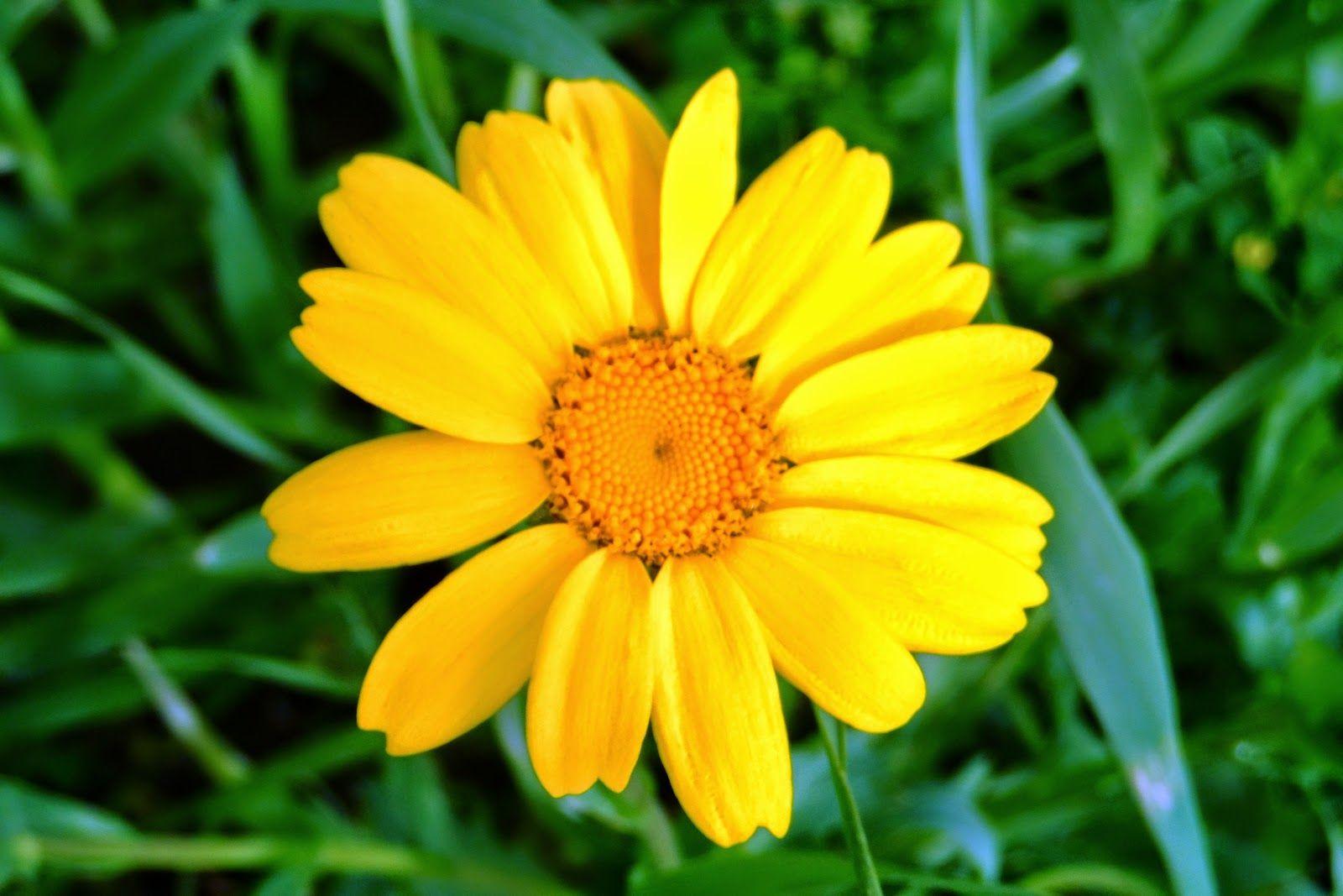 زهرة صفراء Yellow Flowers Plants Flowers