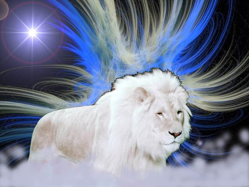 Lovable Images White Lion Hd Wallpaper Free Download Hd White 1600 1000 White Lion Images Adorable Wallpa White Lion Images Lion Pictures Lion Hd Wallpaper