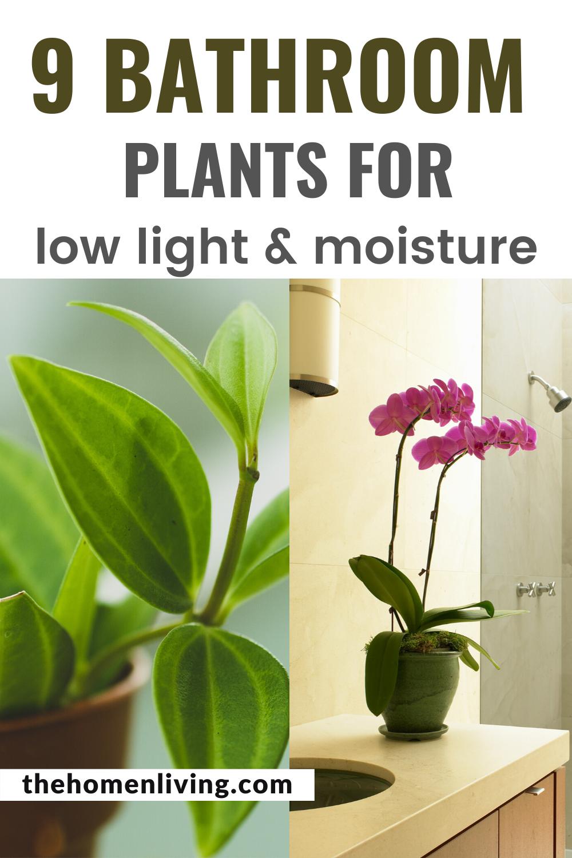 9 Low Light Bathroom Plants that absorb moisture in 2020 ...