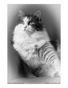 Grayscale coloring page of a cat This Siberian cat is ready for