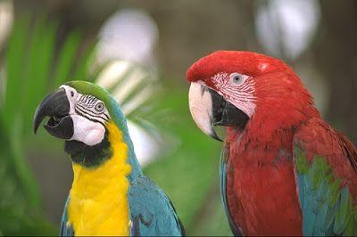 Image Processing On Fpga Verilog Parrot Image Processing Nature Wallpaper