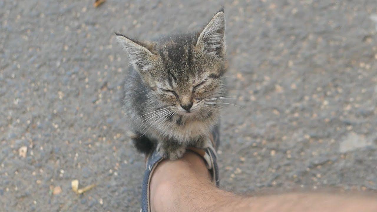 The Kitten Lives On The Street And Sleeps On My Sneakershttps Http Www Youtube Com Attribution Link A Nmnkbmw678 U 2 Kitten Animal Stories Kittens Cutest