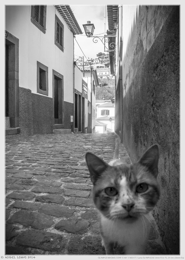 Cat in an Alley 2 by Nigel Lomas on 500px Cute cats