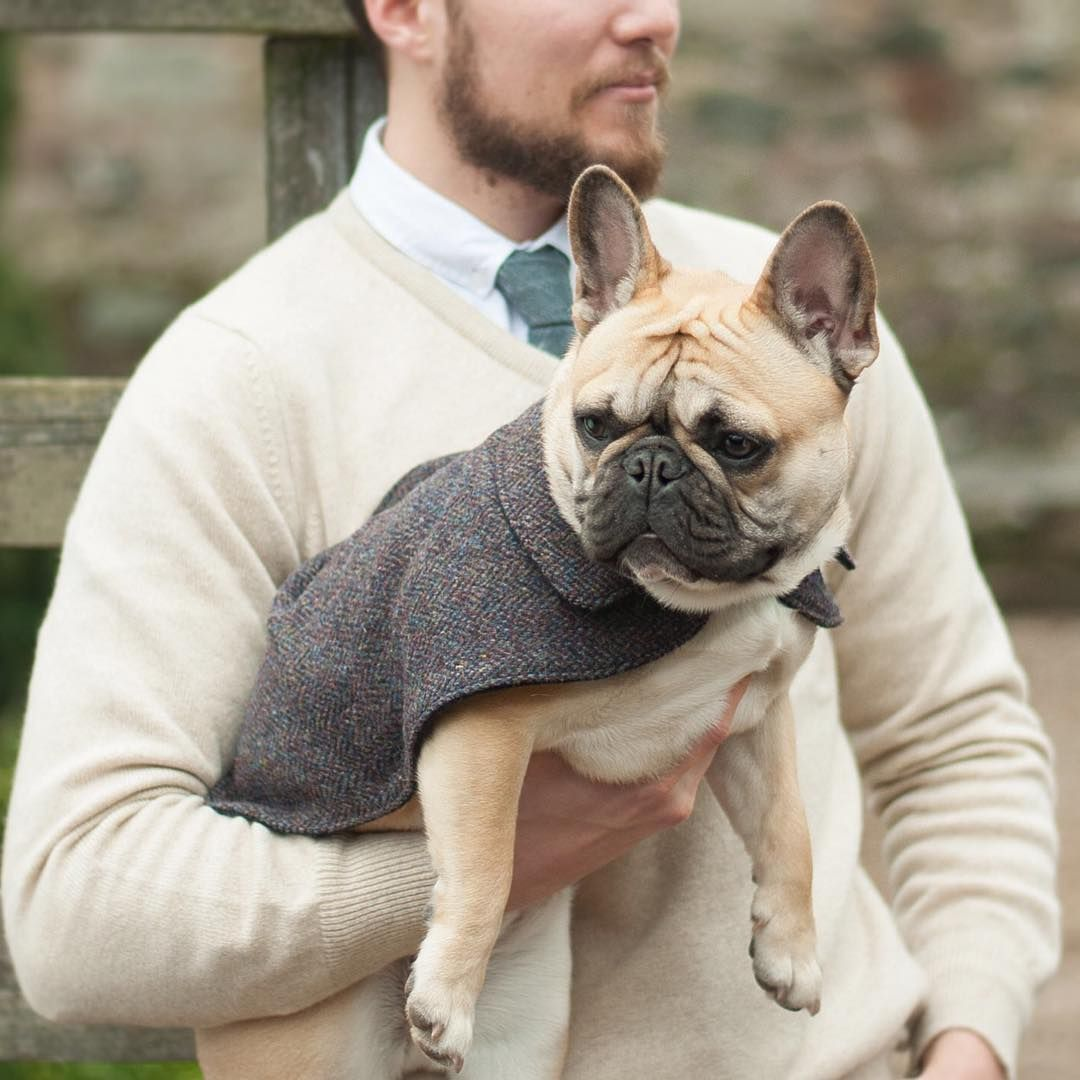 keep your dog warm during long autumn walks with our harris