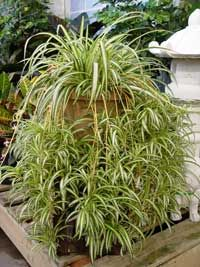 Best Indoor Plants Thrive With Low Light And Less Water 400 x 300
