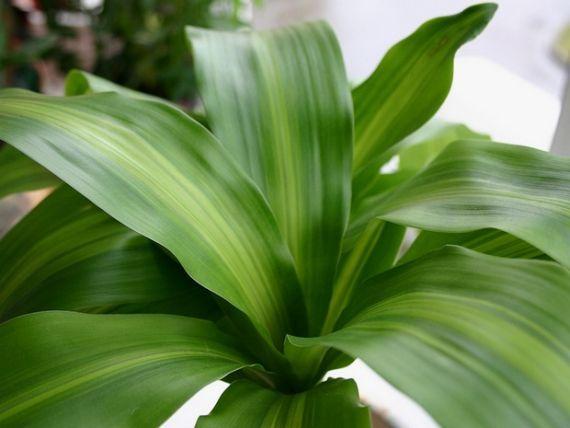 Consejos para cuidar tus plantas de interior en invierno for Planta perenne en maceta de invierno