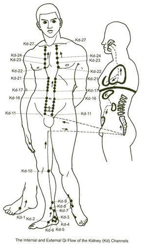 Photo of The Kidney Meridian – Harmonizing Fluids and the Autonomic Nervous System