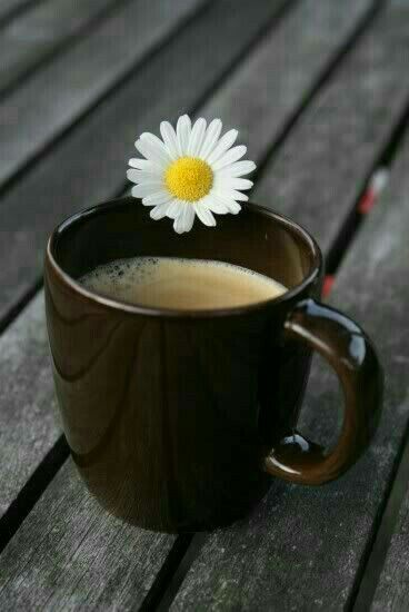 Bom dia ☕