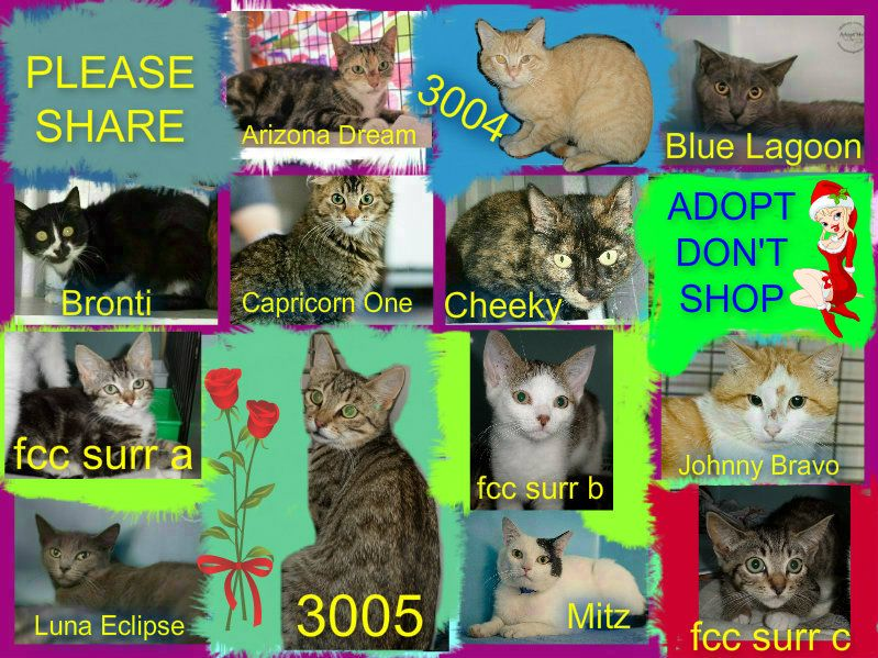 These cats/kittens desperately need a save by 3pm Thu 4/12/14. If you are a rescue or know a rescue that can help to contact Renbury Farm Animal Shelter, NSW