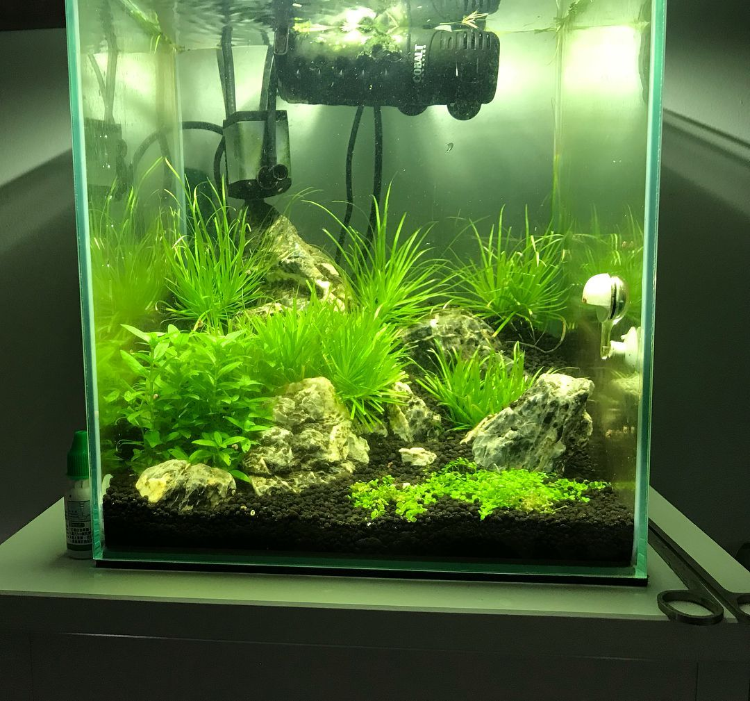 Tank updates My tank is growing with my stream All natural