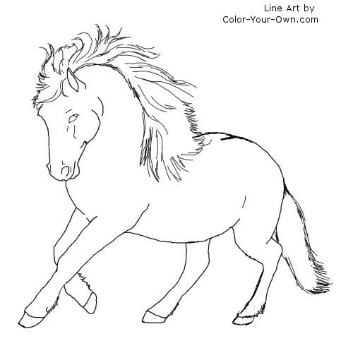 Newfoundland Pony Stallion Coloring Page