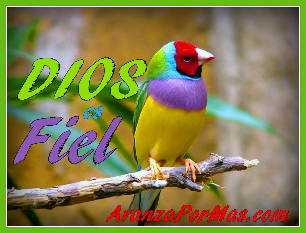 Imagenes Para Facebook Gratis: Tarjetas Cristianas Gratis Para Facebook