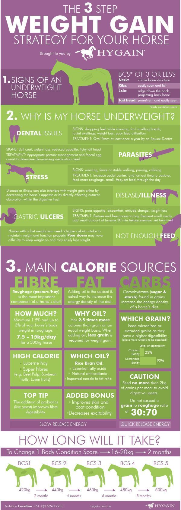 Horse health fact sheet** Many of our horses unfortunately struggle to gain weight or keep the weight on, especially throughout winter with decreasing temperatures. This quick reference fact sheet gives you a three step strategy to get the weight back on your horse, including an analysis of your horse's current b...