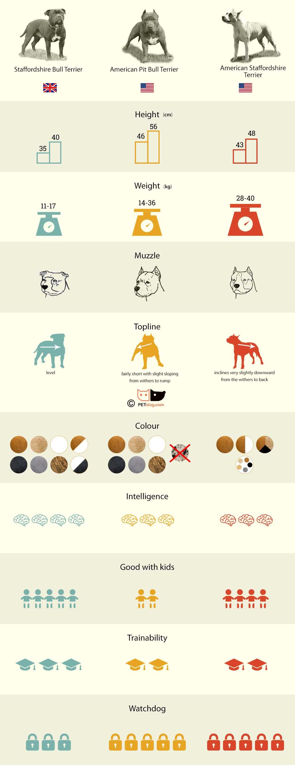 Top 4 muscle building exercises for dogs infographic muscles top 4 muscle building exercises for dogs infographic muscles and building nvjuhfo Choice Image