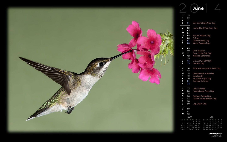Hummingbird Hummingbird, Image, Birds