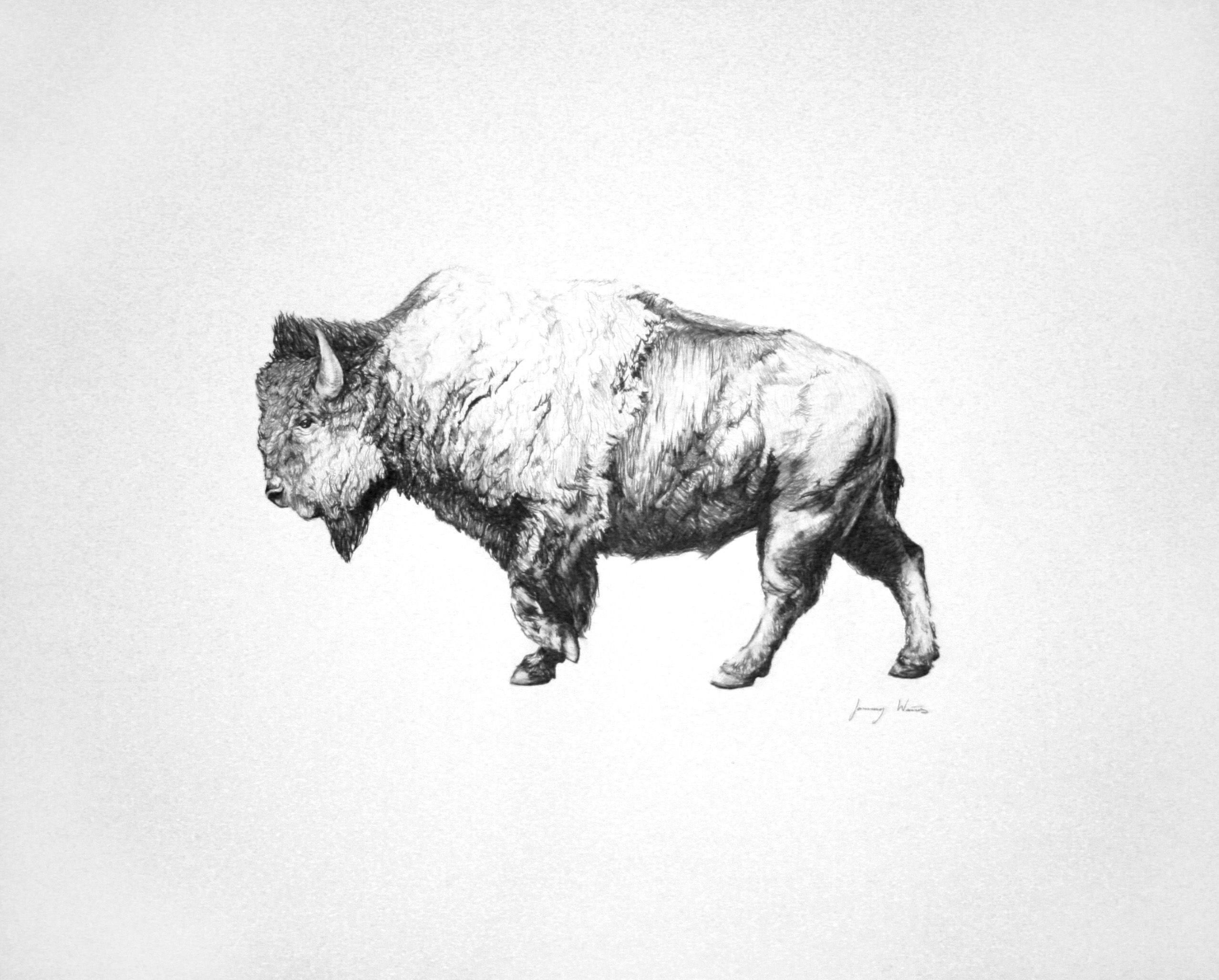 This is my buffalo drawing, in pencil. By January Waters | Tattoos ...
