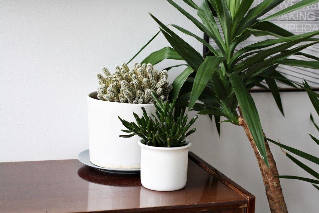 Kwiaty Doniczkowe W Naszym Domu Wybralam Te Naprawde Latwe W Uprawie Planter Pots Plants Planters