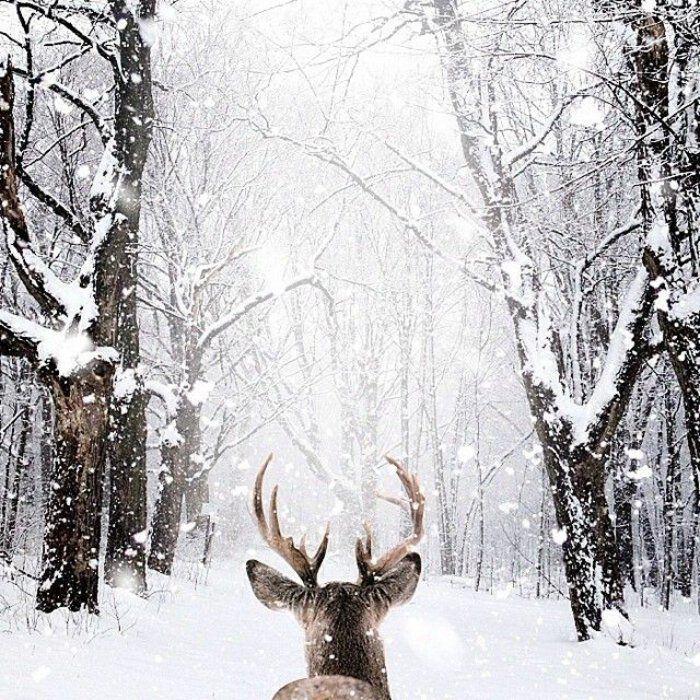 Le paysage d 39 hiver en 80 images magnifiques dessin navidad paisaje paisaje - Paysage enneige dessin ...