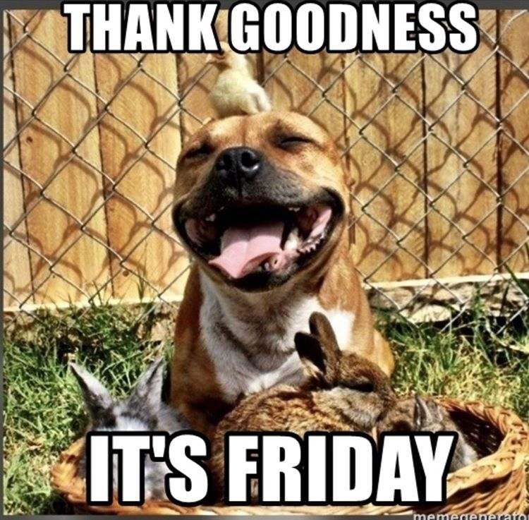 Oh Joy This Is The End Of The First Week Of February 2019 That S Worth Celebrating Theveganpediatrician Drnatalie Pitbulls Father S Day Memes Pitbull Mix
