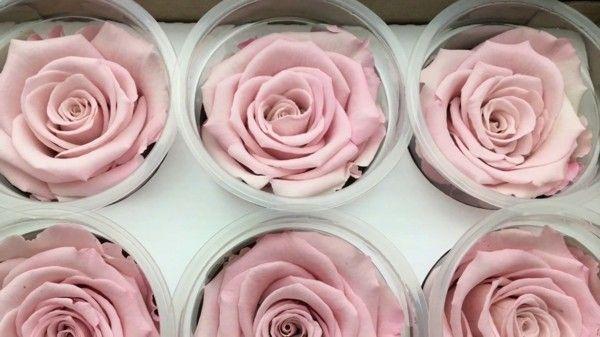 Photo of Rosen konservieren: 3 einfache Methoden und praktische Tipps