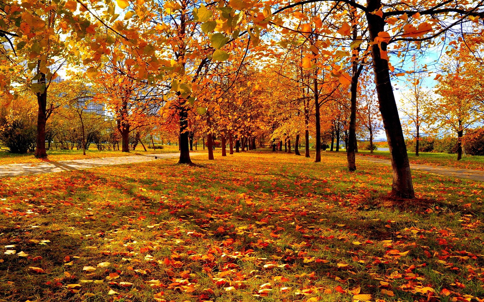 autumn hd wallpapers 1080p high quality Autumn leaves