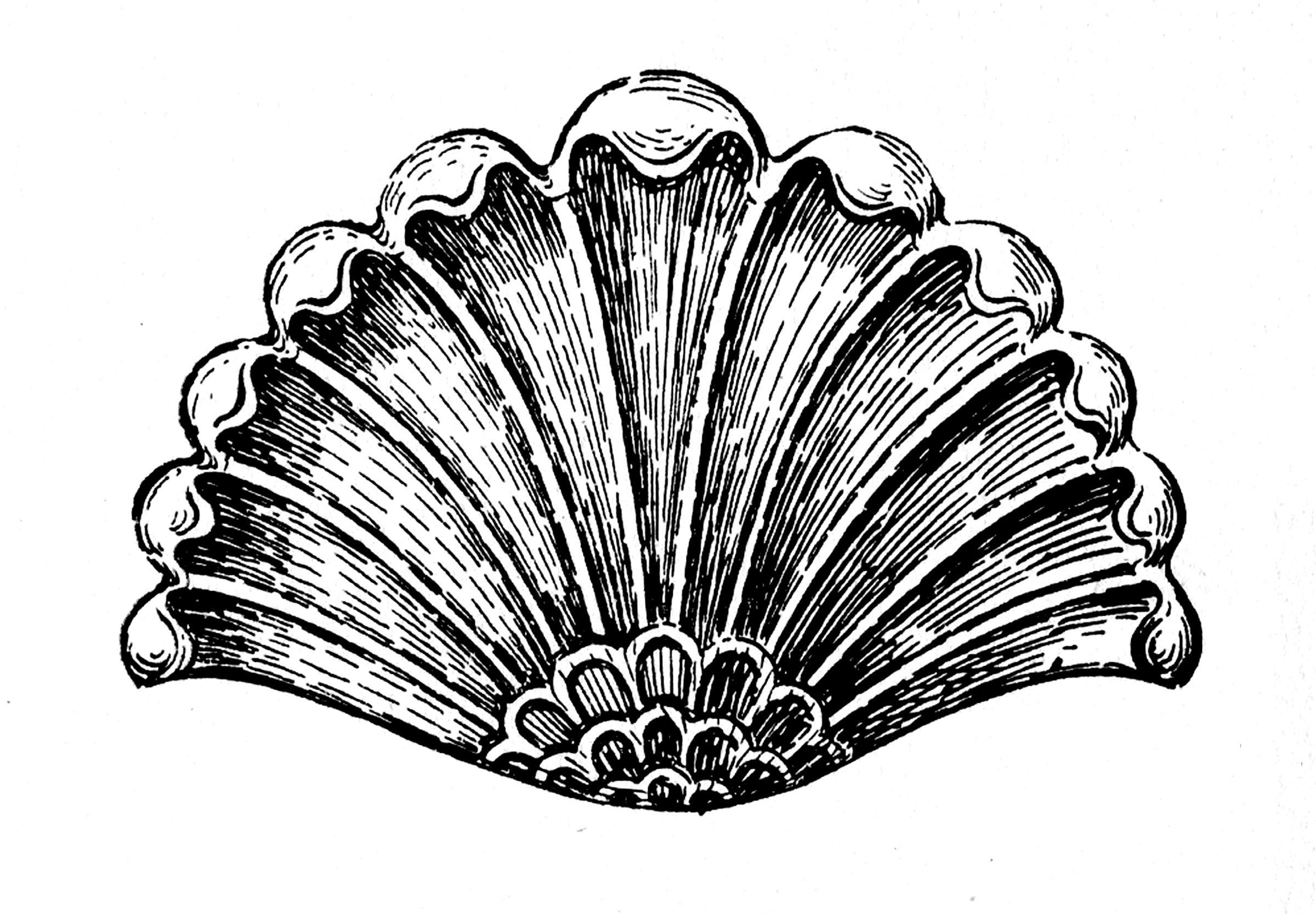 10 Ornamental Shell Clipart Images Clip Art Pictures Vintage Graphics Vintage Illustration