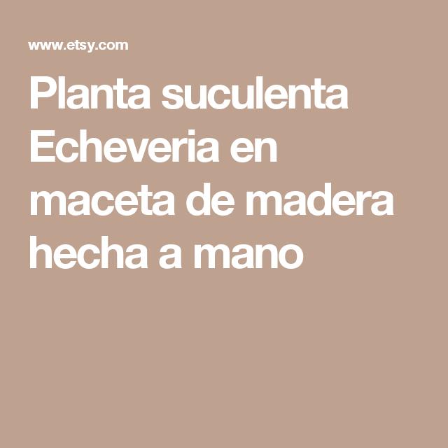 Planta suculenta Echeveria en maceta de madera hecha a mano