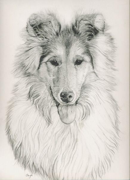 Gayle Mason Fine Art Rough Collie Art Rough Collie Dog