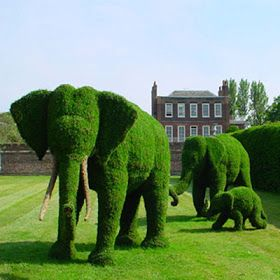 Margy's Musings: Topiary Trees