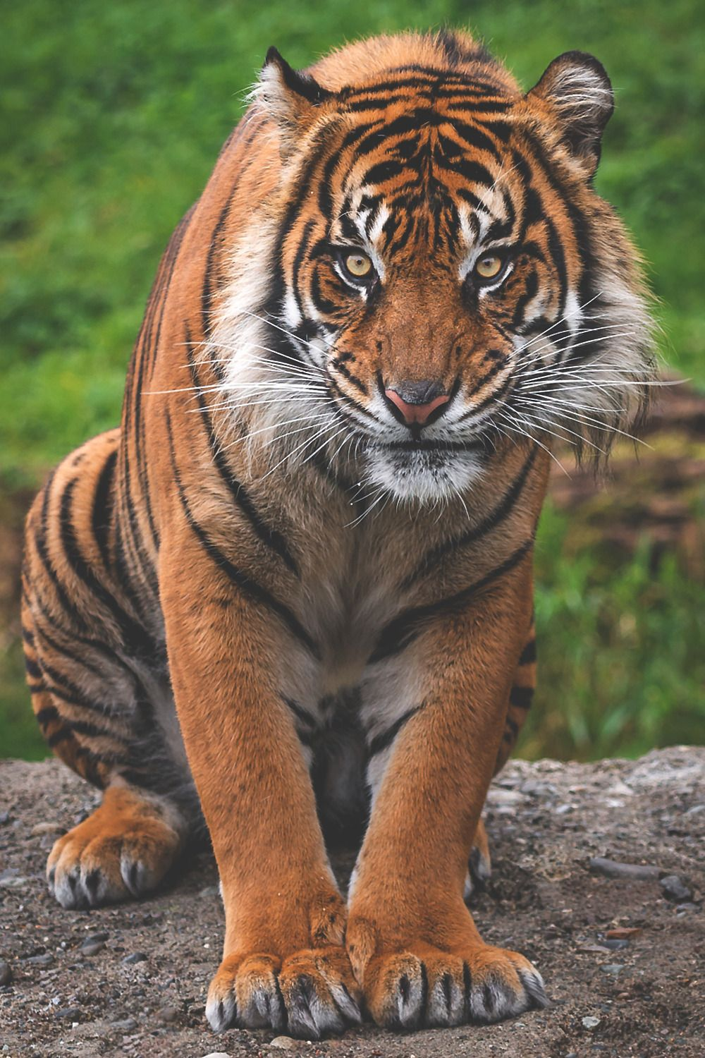 Pin by Emily on Animals Animals, Big cats, Animals beautiful