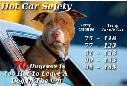Please Repin Summer Is No Time To Leave A Pet In A Vehicle Even With Windows Open Leave Pets At Home Dogs Hot Cars Car Safety