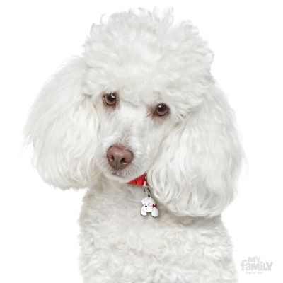 Picture of White Poodle ID Dog Tag