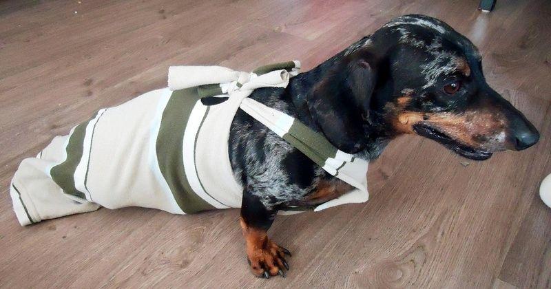 Diy Paralyzed Dog Drag Bag Petdiys