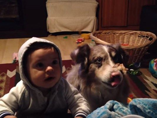 Parents try to teach baby to say 'mama' but the dog says it instead | 9news.com