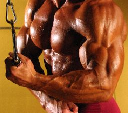 10 Keys To A World Record Bench Press With Images Bench Press Health