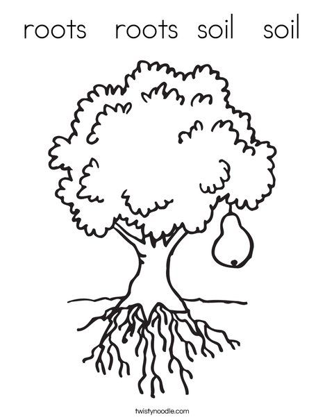 Roots Roots Soil Soil Coloring Page Tree Coloring Page Fruit Trees Coloring Pages
