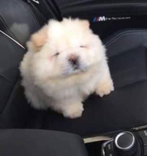 Mash potato | Cute dogs, Cute animals, Dogs