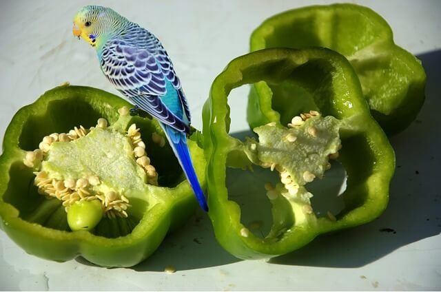 Here are the 12 best treats for budgies - Read this ...