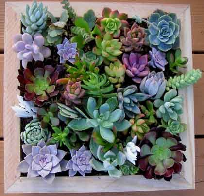 Charming Complete Succulent Wall Art Kit, Comes With 25 Cuttings, Moss And Soil,  Fathers Day Gift