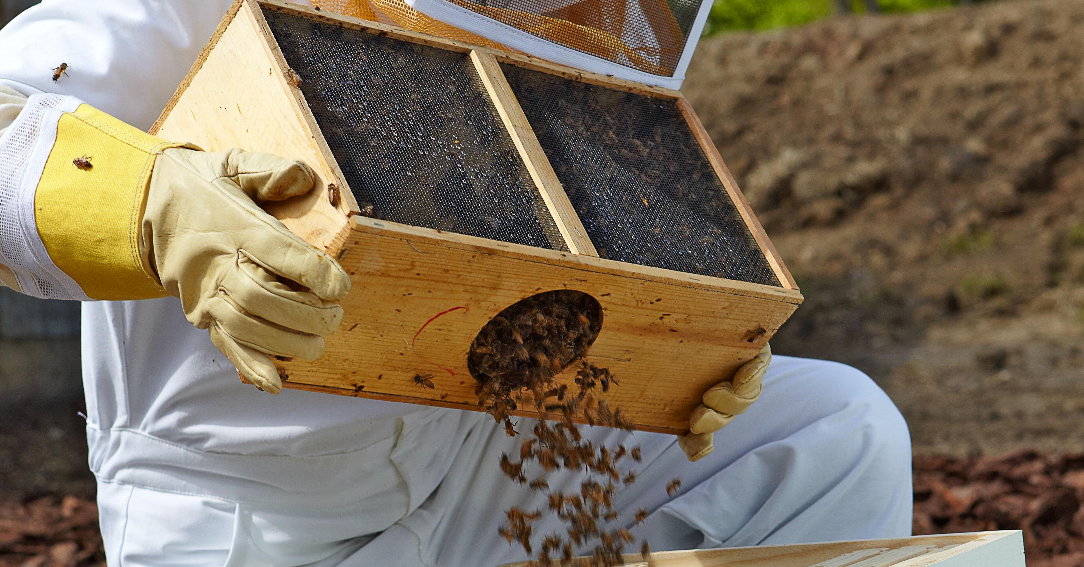 5 Steps to Start a Beehive in Your Backyard in 2020 ...