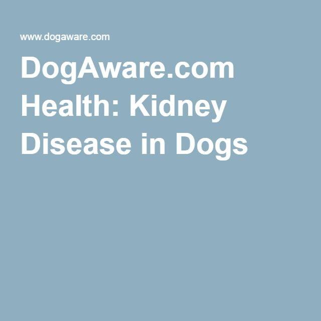 Kidney Disease In Dogs Dog Kidney Disease Diet Kidney Disease Recipes Kidney Disease Diet Recipes